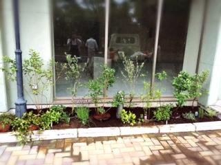 お店の花壇が完成。今後の成長が楽しみ〜。